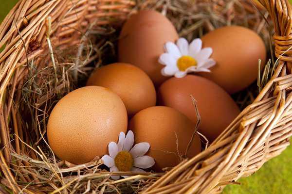 Польза куриных яиц для организма